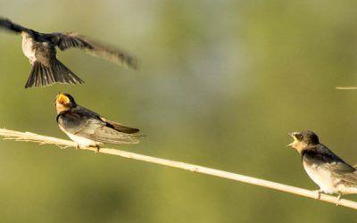Curs d'iniciació a l'ornitologia